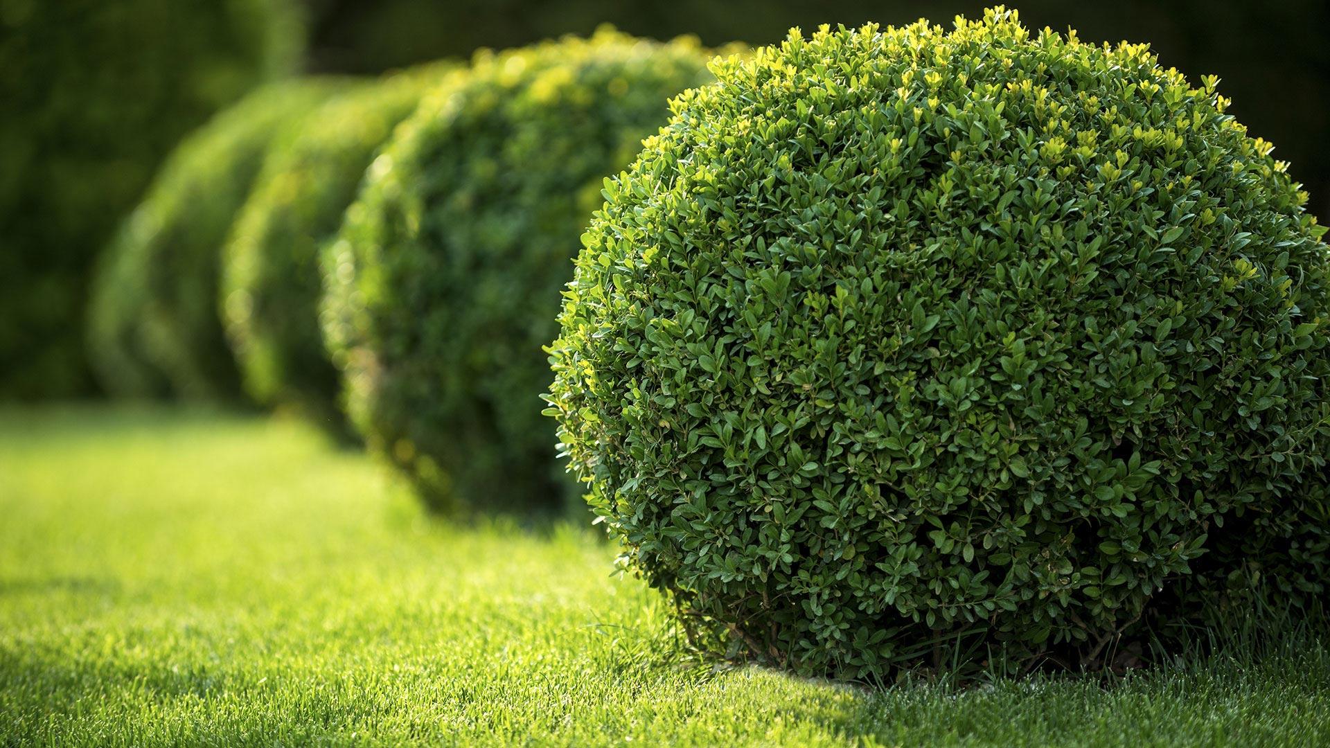 Eastside Landscaping And General Home Services Lawn Care Services, Gardening Services and Lawn Fertilization slide 1